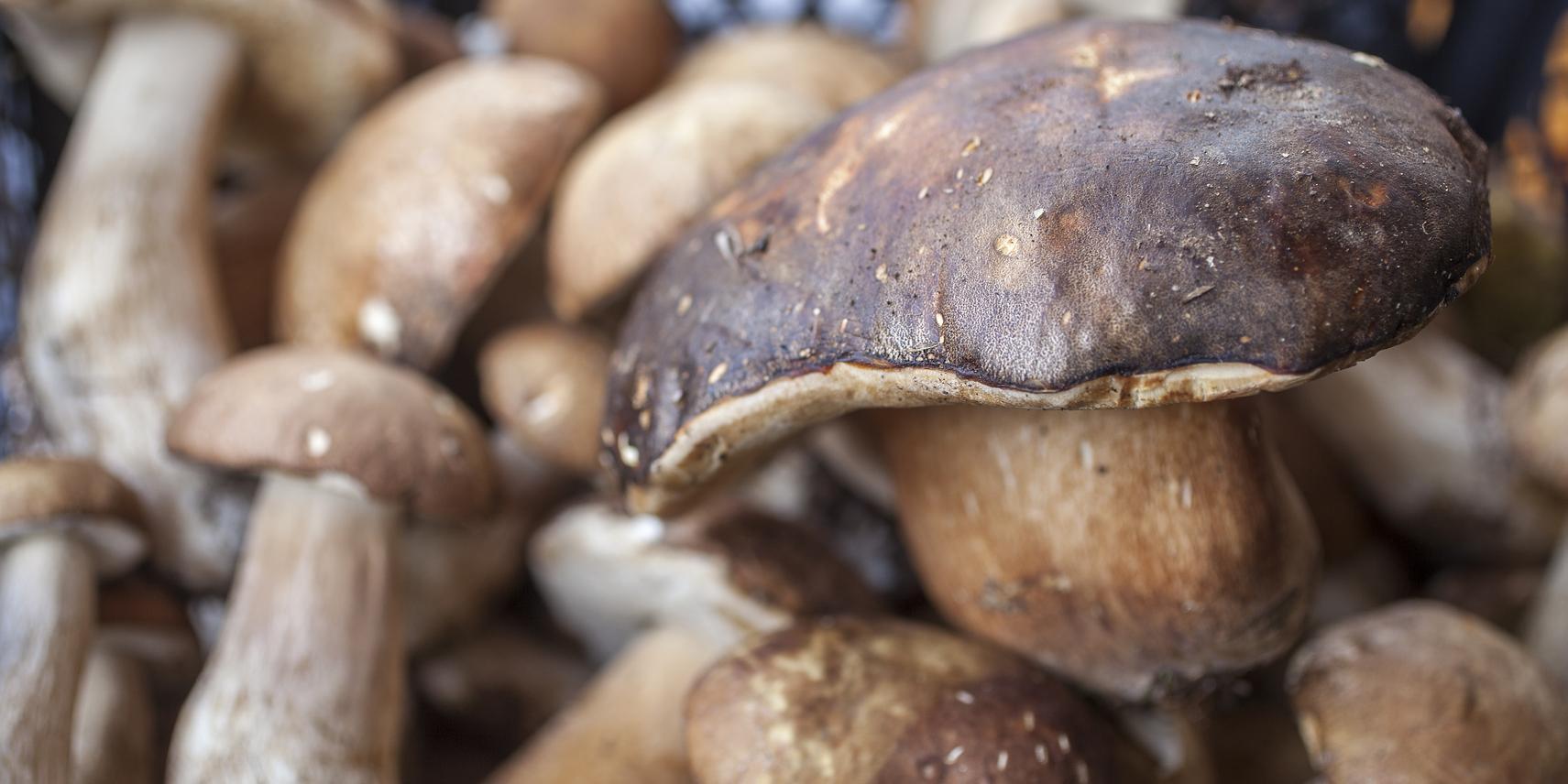 Intoxication champignons