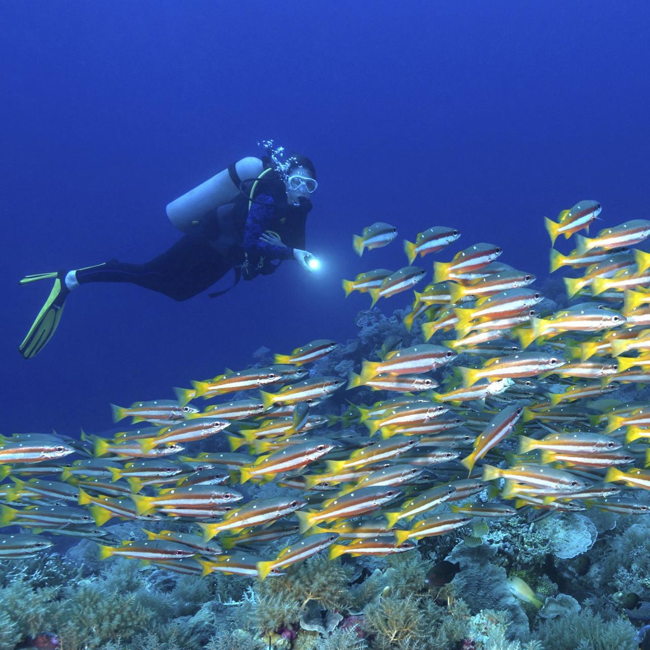 La plongée sous-marine en toute sécurité