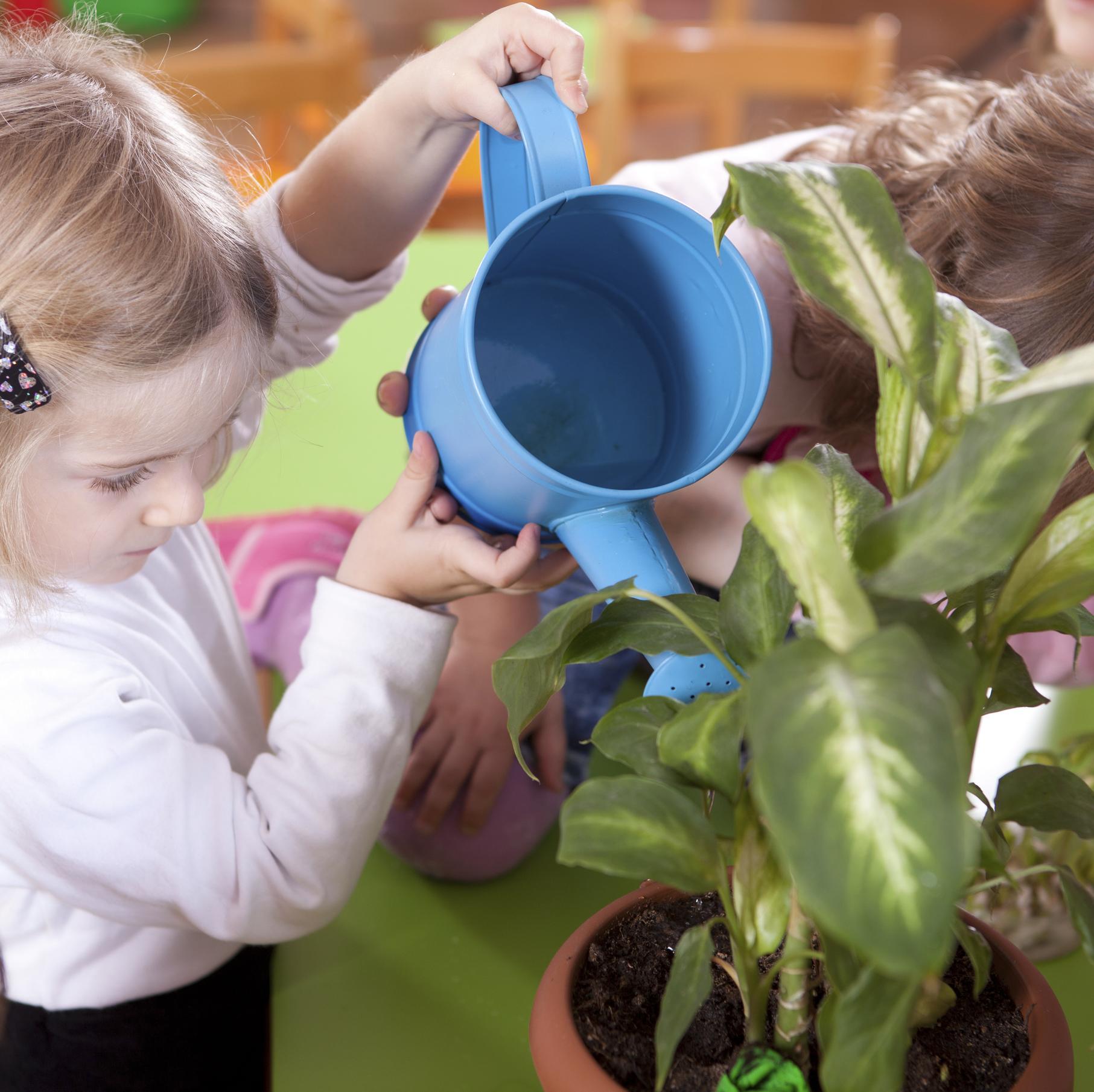 intoxication plantes intérieures