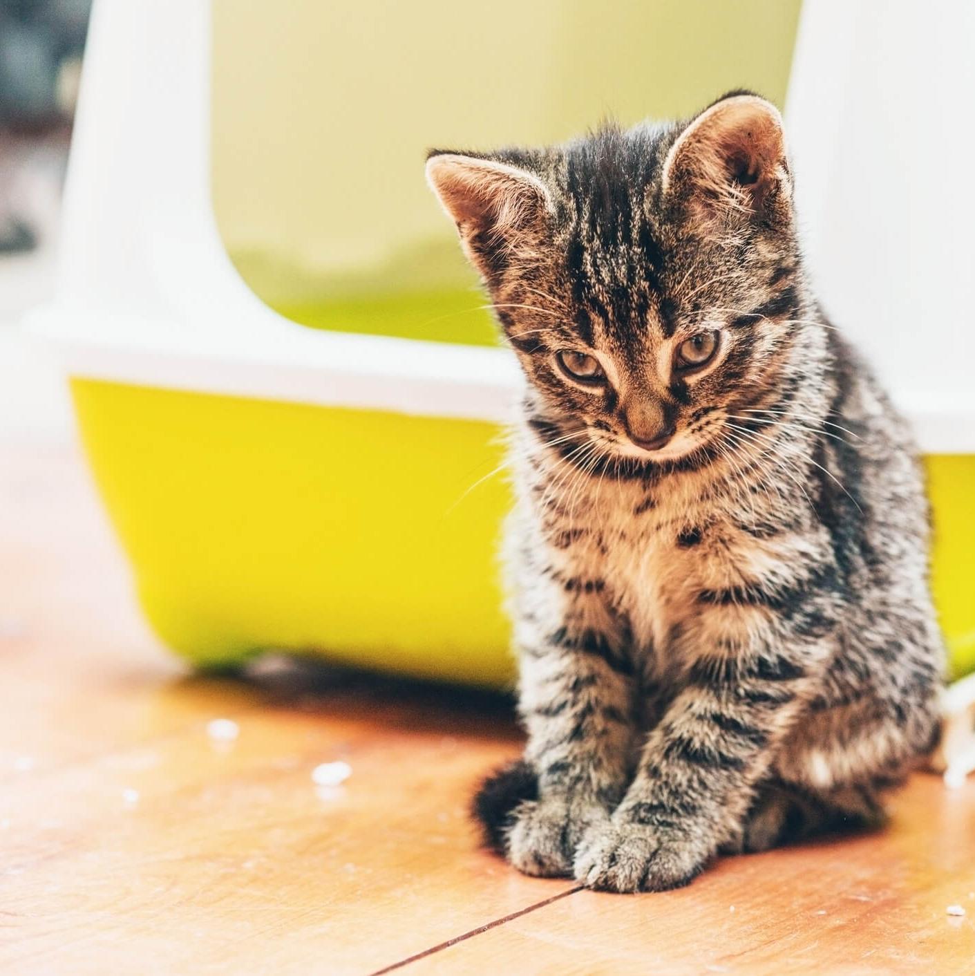 Comment prévenir les maladies transmises par les animaux de compagnie ?
