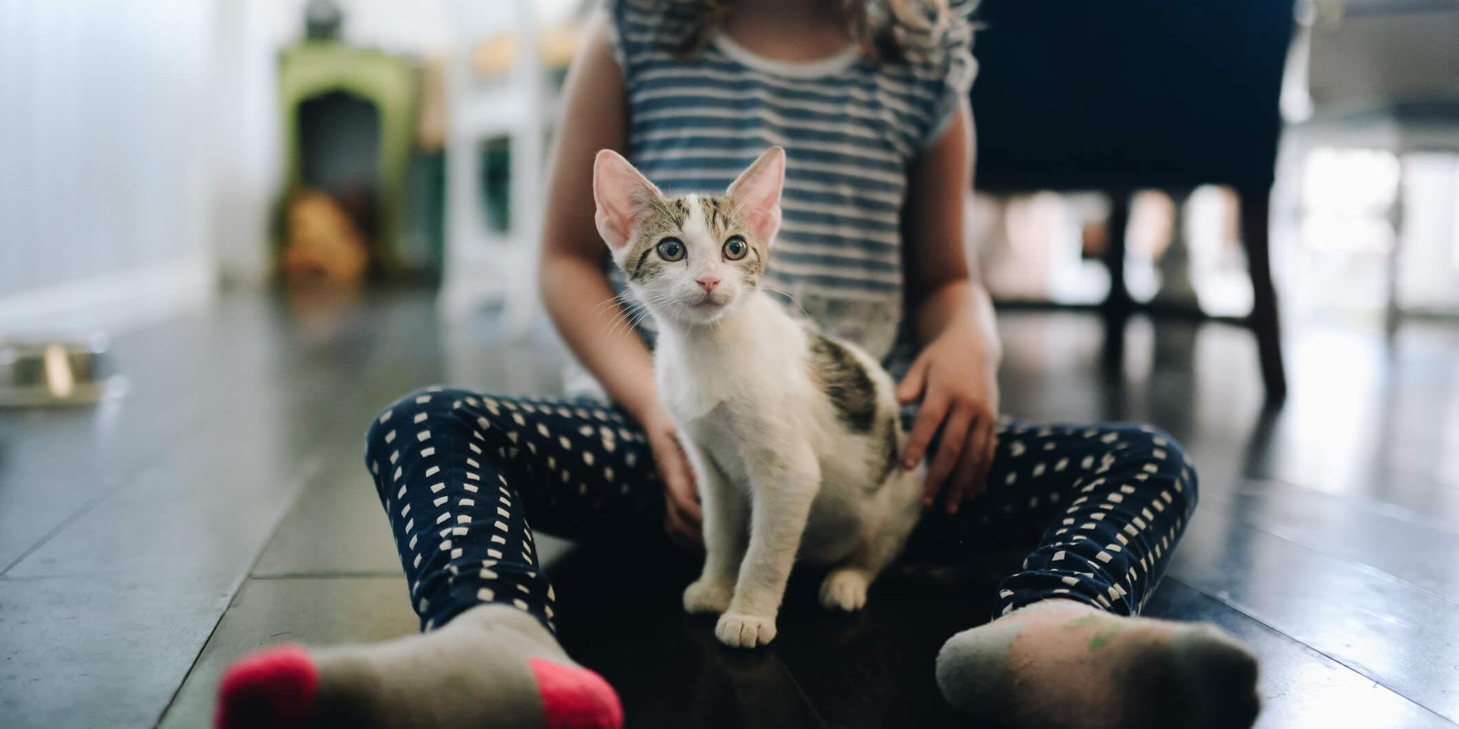 Quelles maladies peuvent être transmises par les animaux de compagnie  ?