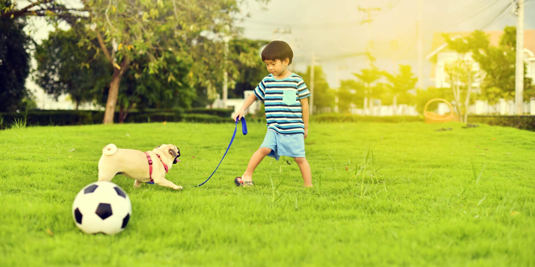 Avoir un animal de compagnie est-il bénéfique à la santé de votre enfant ?