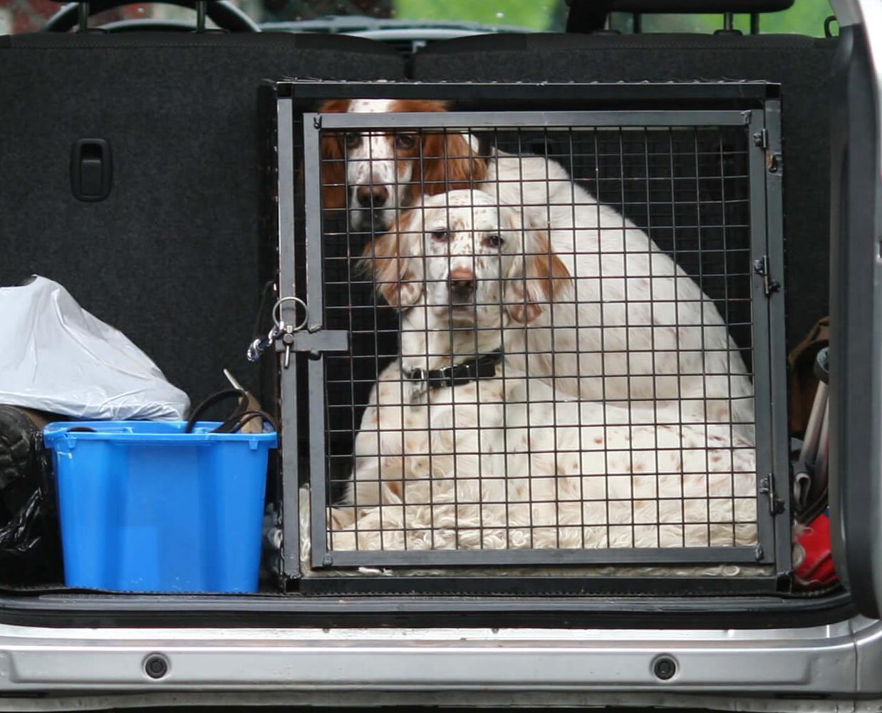 Le bon comportement avec un animal de compagnie en voiture
