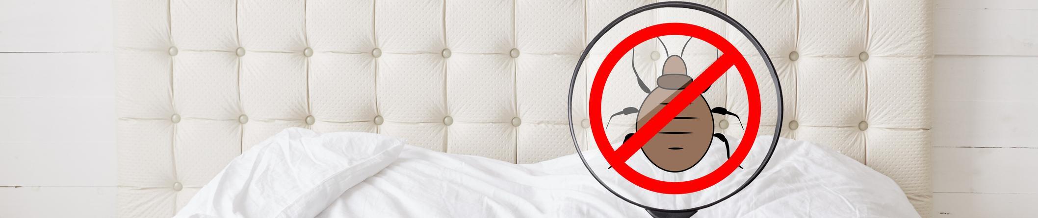 Punaises de lit : comment ne pas en être victime ?