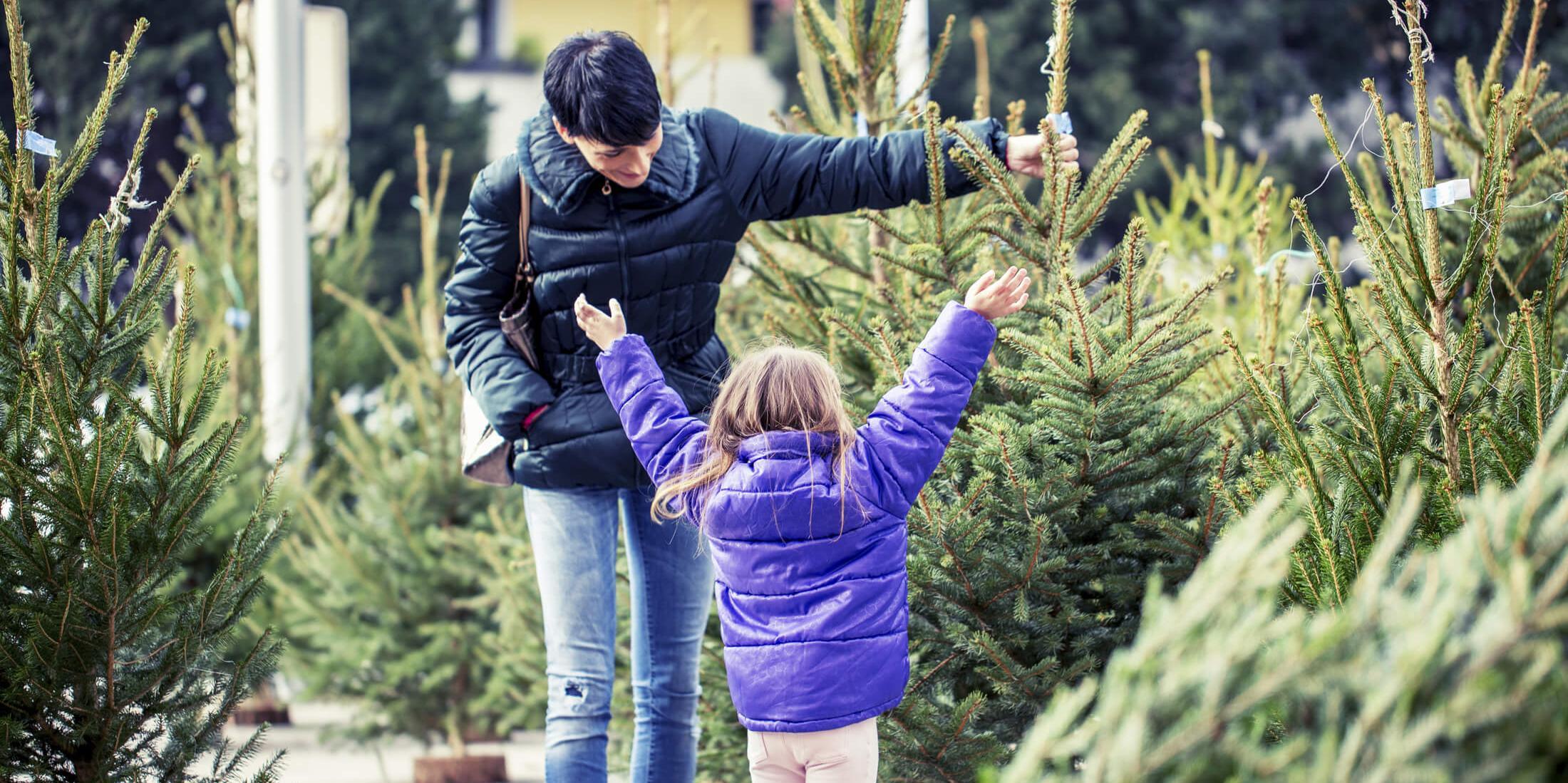 Noël : bien choisir son sapin